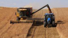 ukrayna- tahıl -arpa -mısır buğday ukraynada tahıl çok-koyun- hayvancılık -ukrayna buğday fiyatları 2017 -ukrayna buğday fiyatları 2018 -ukrayna buğday üretimi -mısır fiyatları 2017 -arpa fiyatları ne olur -serbest piyasa mısır fiyatları -yemlik mısır fiyatları