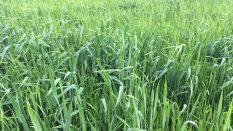 ukrayna buğday tahılda dünyada ukrayna buğday fiyatları 2017 ukrayna buğday fiyatları 2018 ukrayna un ithalatı ukrayna'dan buğday ithalatı ukrayna'dan un ithalatı ukrayna da arpa fiyatı tahıl fiyatları ukrayna nohut fiyatları          Ukrayna Tahıl Ürünleri Fiyatları   Buğday / Wheat (12,5 protein) ?  Buğday / Wheat (Yemlik/Feed) ?  Arpa (Yemlik) / Barley (Feed) ?  Mısır (Yemlik) / Corn (Feed) : ?  Ayçekirdeği / Sunflower ?  Soya / Soybean ?  Kanola / Rapeseed ?