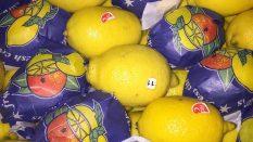 Turkiyeden ukrayna kiev gelen ilk yarenci portakal mandalin nar gereyfut  ukrayna'ya yarenci satmak
