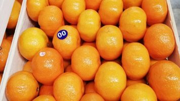 Turkiye'de Fabrikada hazırlanan mandalin portakal limon ihracat için yapılan kasalama