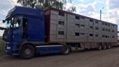 Turkiye'den ukrayna'ya ukrayna'ya Turkiye'ye termokinli tırlar nakliye firmaları koyun taşımak için nakliye fiyatları tenleri tırlar kereste ceviz taşınması için kaliye