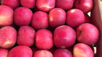 ukrayna'da elma fiyatları ukraynada toptan elme  ukrayna'da elma fabrikaları ukrayna'da elma nerden alablirim التفاح العراق أوكرانيا أسعار التفاح من أوكرانيا اوكرانيا لحوم الدجاج بيض الجوز طحين السكر