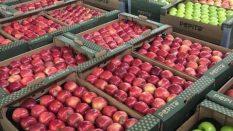 ukrayna'da elma fiyatları ukrayna'da elma fabrikaları ukrayna'da elma çeşitleri ukarantada elma gümrüğü ukrayna'da elma almakukrayna'da elma nasıl alabilirim toptan elma